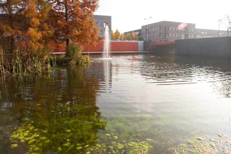 LAND ART in Ede - an Urban Oasis - Bald Cypress trees (Taxodium Distichum) in autumn colors, water, concrete and color.