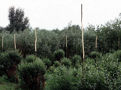 Merwelanden wetlands near Dordrecht - environmental art - willow trees installation - by Lucien den Arend